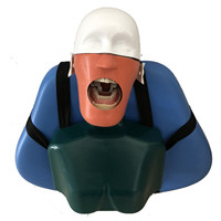 Dental Training Head Model