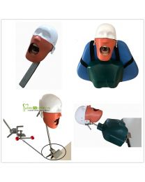 Dental Teaching Training Model Head Model