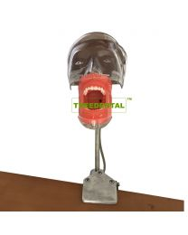 Dental Teaching/Training Model,Head Model,Phantom Head Manikin,Can Be Fixed On The Dental Chair,FE Articulator, Head Model  Height  Can Adjustment
